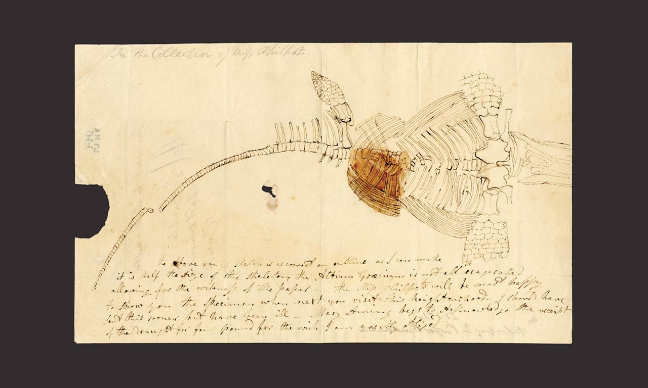 Iluminando la ciencia: Paleontólogas e ilustradoras